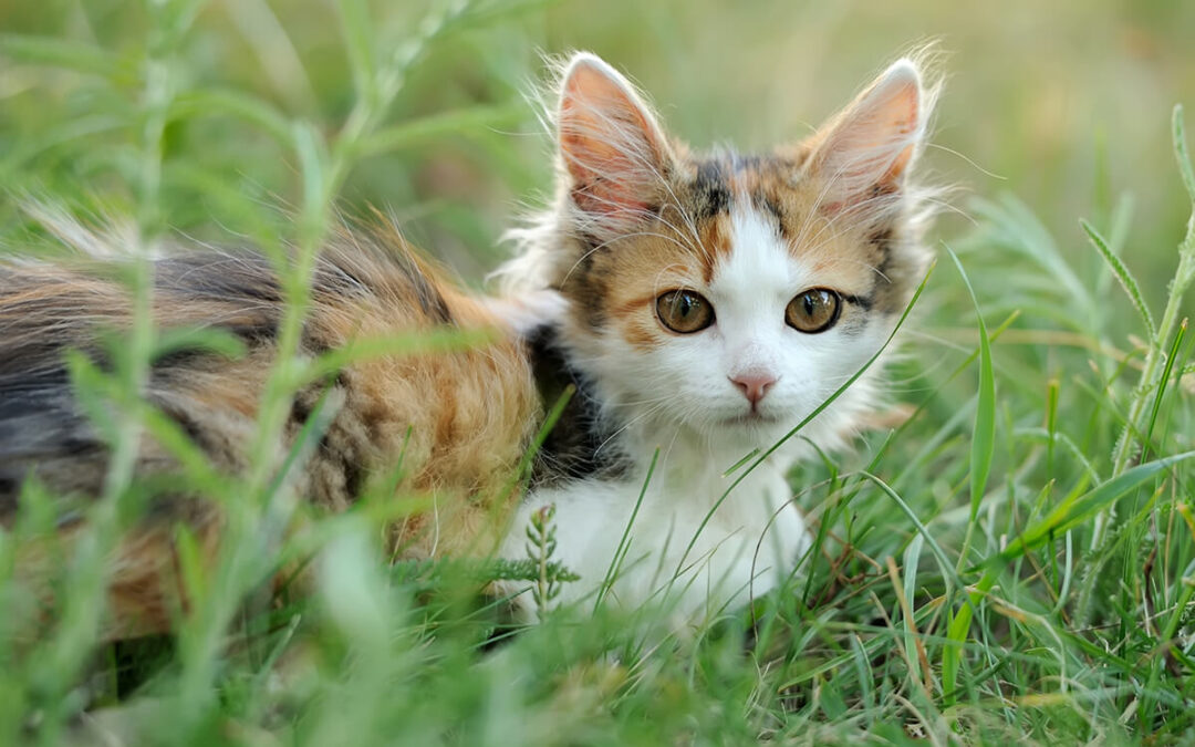 Guia de Raça: Gatos